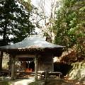 Photos: 頼政神社のトチノキ