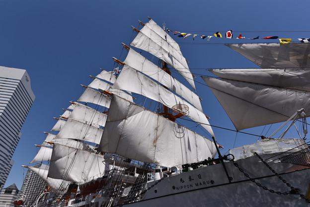 日本丸 総帆展帆+満船飾
