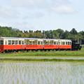 Photos: 小湊鐵道 里山トロッコ4号