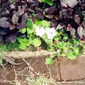 Photos: 2012-04-06 13.18.23_meitu_4