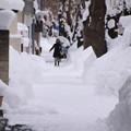 桜並木の歩道02
