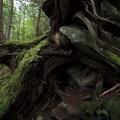 Photos: 岩を抱く