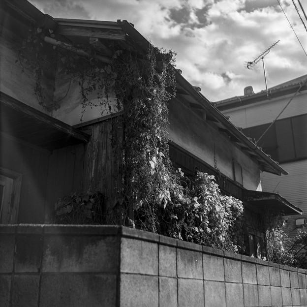 ツルの絡まる家