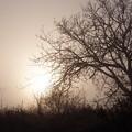 写真: P3092910 (2)