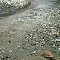 写真: 20110627_123218_raw