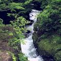 深緑のなかの渓流