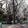 東川の桜2