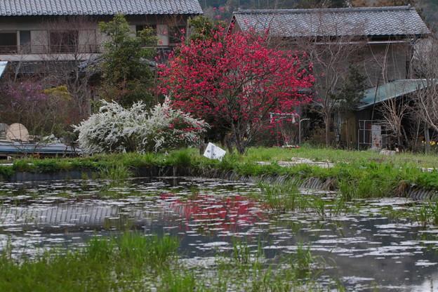 秩父の春景色