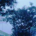 写真: 霧の山01 強風
