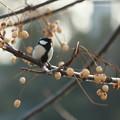 写真: 小鳥と実と