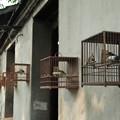 Photos: 鳥かご