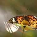 写真: 蝶々夫人