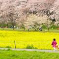 写真: 春を走る
