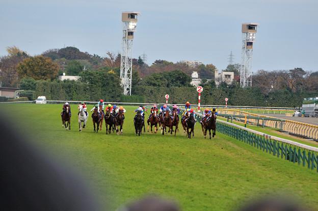 第35回ジャパンカップ 直線(1)