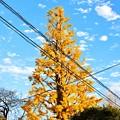 teramachi2_09_02