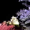 Photos: 姫路城 夜桜会