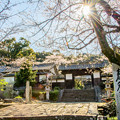 写真: 花冷えの春光寺