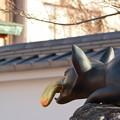 写真: 伏見稲荷参拝