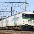 Photos: _MG_0689 成田臨 185系