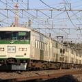 Photos: _MG_0786 成田臨 185系