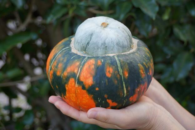 魔法のかぼちゃ