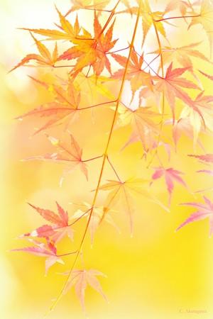 舞岡公園の秋 *母さん、僕が見えるかい*