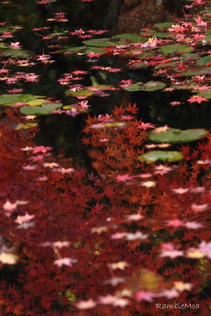Photos: 過ぎゆく秋の水面