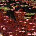 写真: 過ぎゆく秋の水面