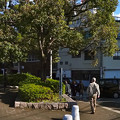 Photos: 京橋 左岸緑地 京橋東詰 広島市南区京橋町