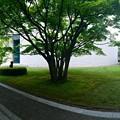 Photos: ひろしま美術館 中庭 広島市中区基町