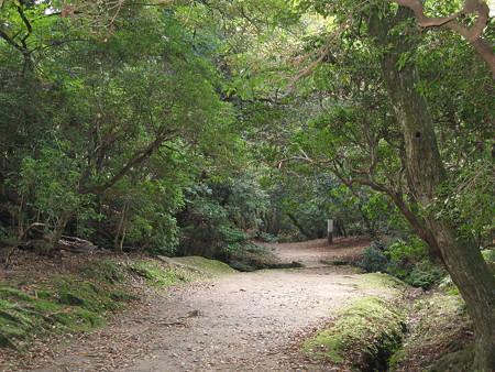 奈良公園 ささやきのこみち