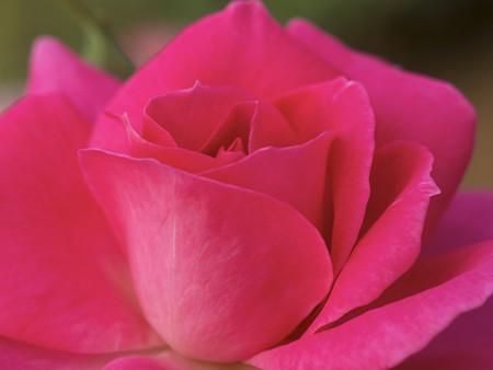 ピンク系1