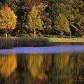 秋色の水鏡