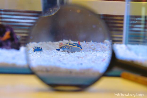 Photos: sea slug