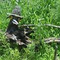 Photos: 玉祖神社前の鳥の枯れ木アート (6)