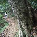 Photos: 登山道を行く