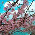 写真: IM0270春の訪れ