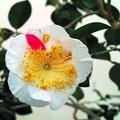 IM0285花椿