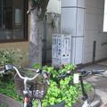 Photos: 西ノ宮のアレ