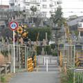 Photos: 豊津墓道