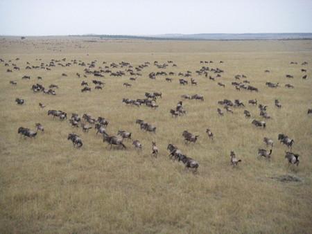 マサイマラ国立保護区にて