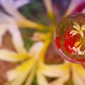 Photos: そら玉の中の秋
