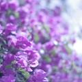 Photos: Purple air