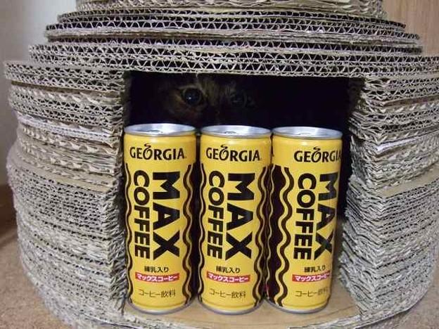 これがMAX COFFEE