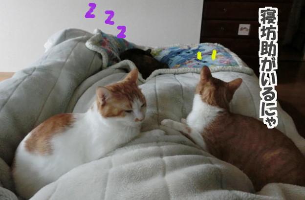猫の重し3つ