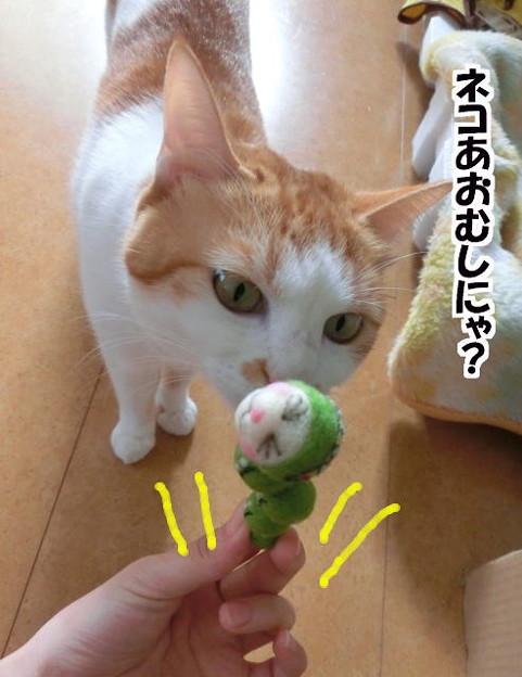 青虫をかぶったネコ