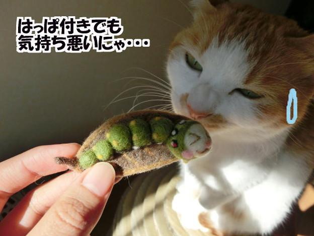 葉付き青虫