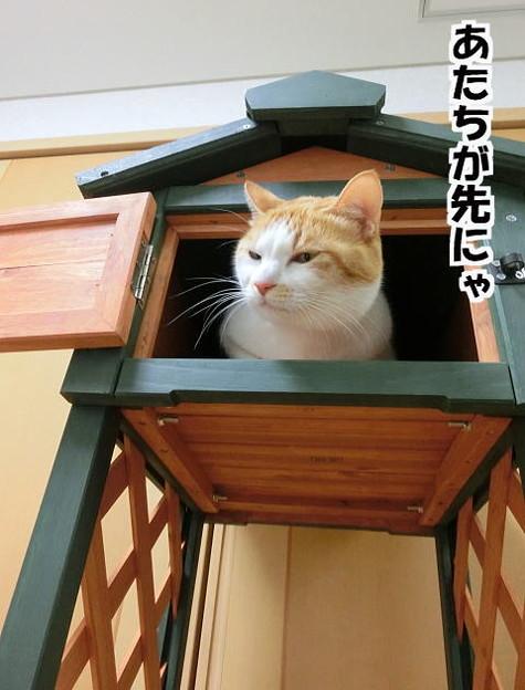 猫の小屋じゃありません