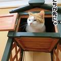 Photos: 猫の小屋じゃありません