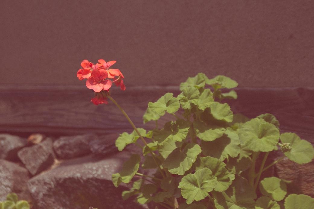 写真: IMG_0520